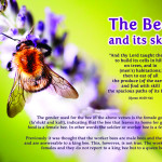 Picture Perfect : Quran & Modern Science – The Bee & its skill