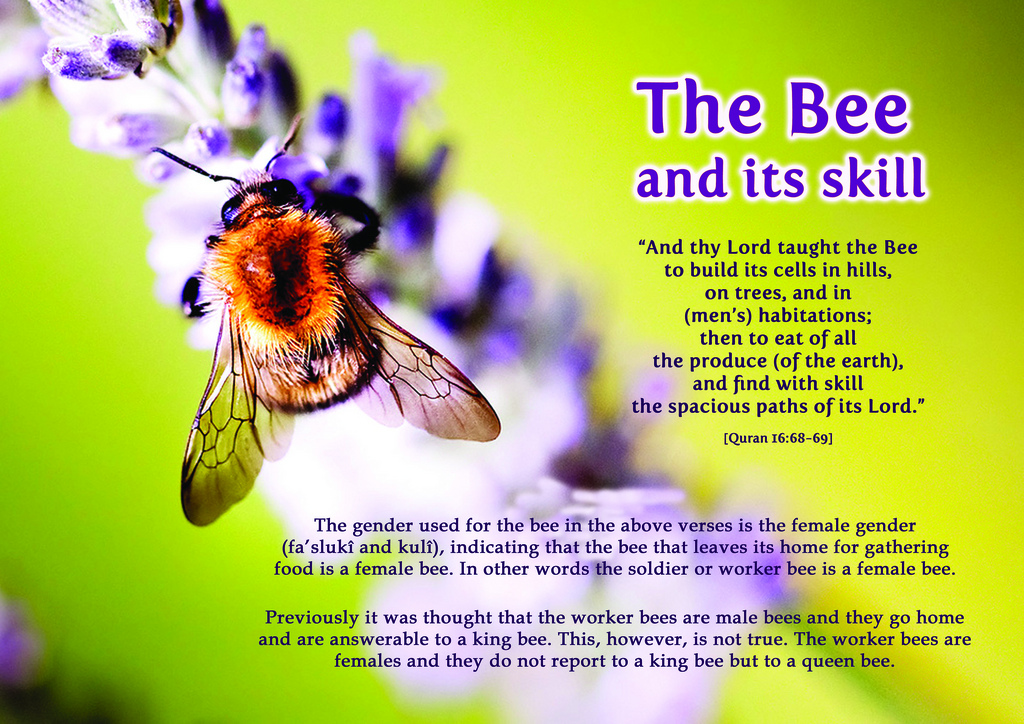 picture quran modern science the bee its