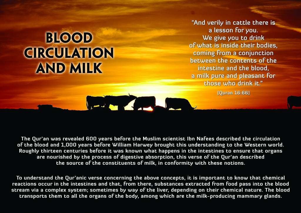 Picture Perfect  Quran  Modern Science  Blood Circulation  Photo Courtesy  Httpwwwflickrcomphotoshappyindya