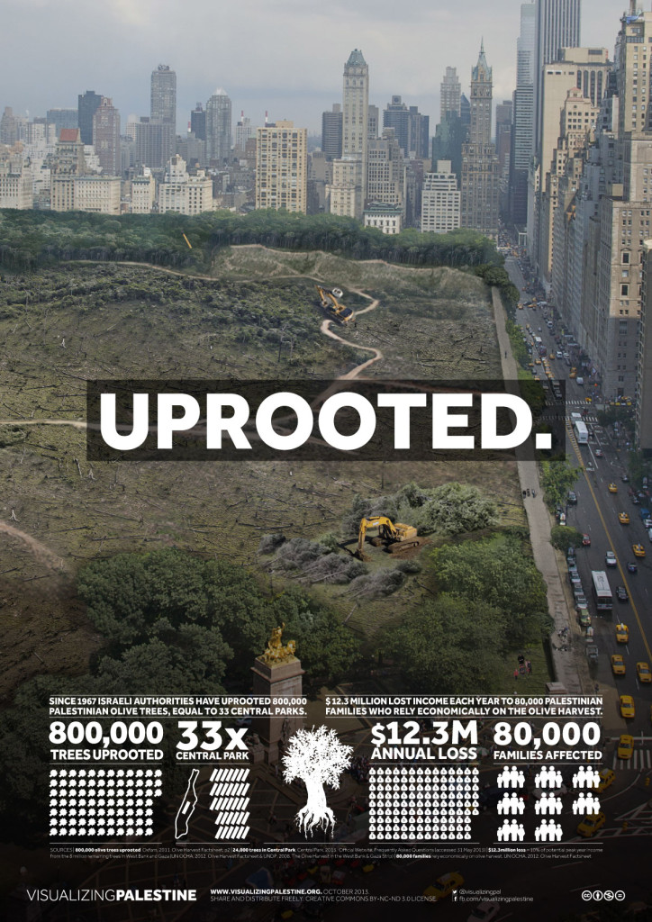 Since the occupation began in 1967, Israel has uprooted 800,000 olive trees belonging to Palestinians, enough to fill 33 Central Parks in New York (USA).