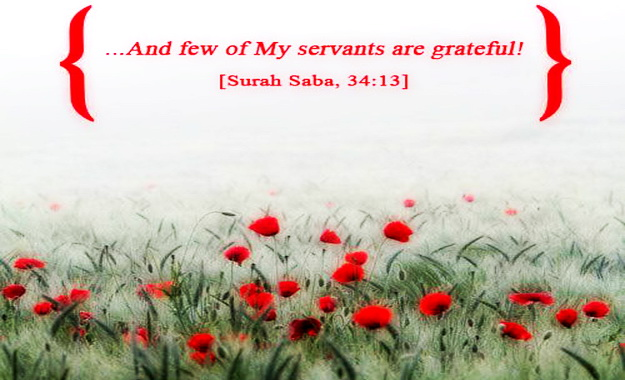 And few of My servants are grateful. 34:13